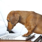 Working Like a Dog? Important Lessons to be Learned From Fido!