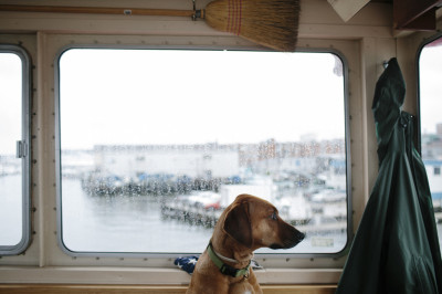 PORTLAND, ME - OCTOBER 24: Designated Senior Deck hand Gretchen Frank's dog, Zuri, sits in the ferry operator cabin before the ferry leaves for Peak's Island in Portland, ME on Friday, October 24, 2014. (Photo by Whitney Hayward/Staff Photographer)