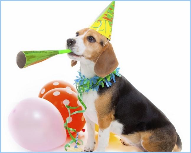 national pet day 2016 pets world
