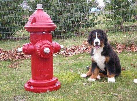 Dog Park Furnishings Fire Hydrant