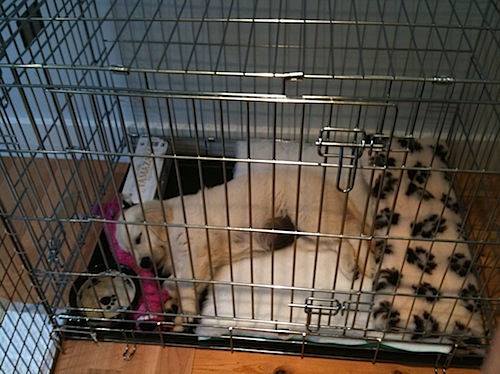 How To Crate Train Small Dogs