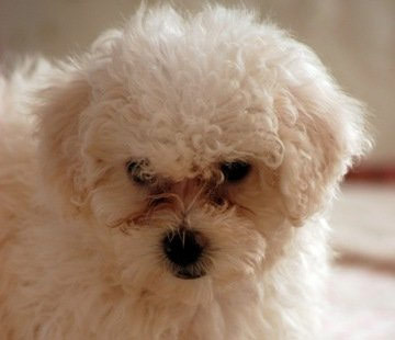 Wipe Dry and Say Goodbye to Your Dog's Tear Stains - Animal Fair