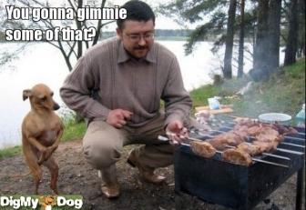 bbq-grill-yummy-bbq-lake-beg-picnic-dogs-1301445408