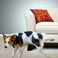 dog-marking-2