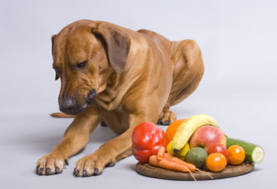 healthy-dog-diet1