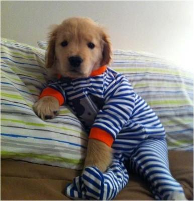 puppy-in-a-onesie