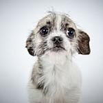Adopt Me! Princess Arabella @HumaneSocietyNY !