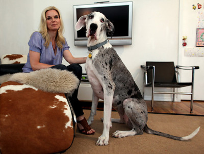 BIG DOGS: Rikke Brogaard with her 120-lb great dane Olive in her apartment in Clinton Hill, Brooklyn. Original Filename: IMG_1288.JPG