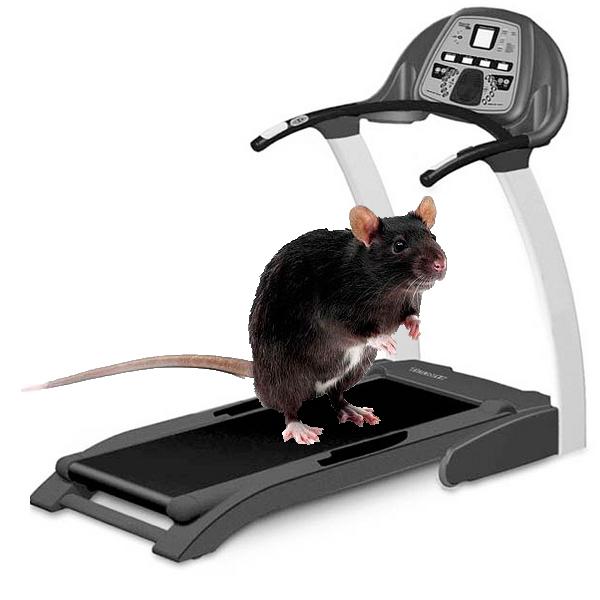 Love Pixar S Ratatouille Then Get A Pet Rat 10 Reasons