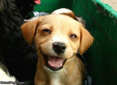 Smiling_Cute_Puppy