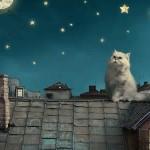 A Roaring Mercury Retro Astro Pet Update!
