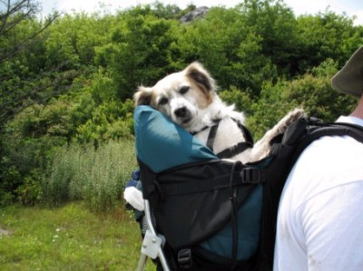 doghiking4