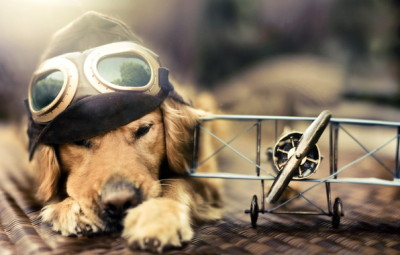 dog-airplane-glasses-a-dream-flying-Favim.com-481563