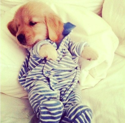 puppy in pjs