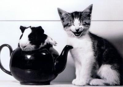 Happycat4