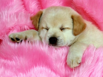 dog-wallpapers-01