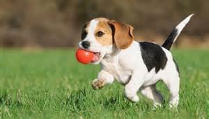Puppyball
