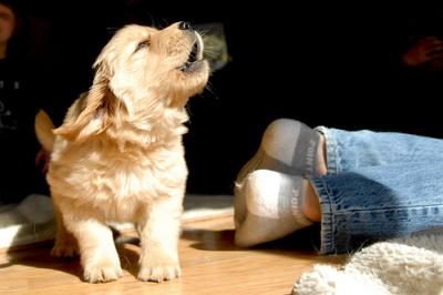 dogbarkingfeet