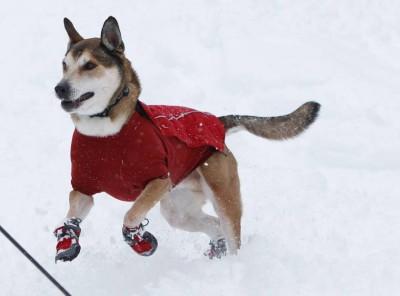 ruffwear-barkn-boots-polar-trex-per-2