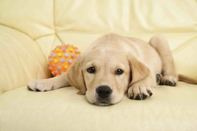 cute-dog-on-the-couch