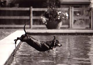 kamil dachshund1