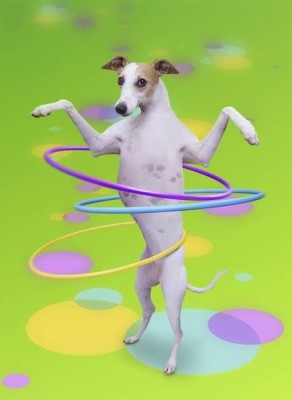 JohnLundspindog