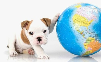 earthdaydog