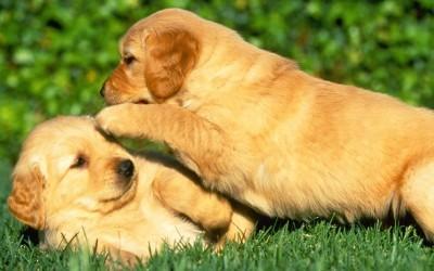 Puppy-Power-puppies-15897198-1280-800-400x250