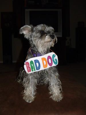 bad-dog-1549051