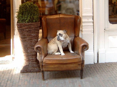cool-dog-in-chair-1463698