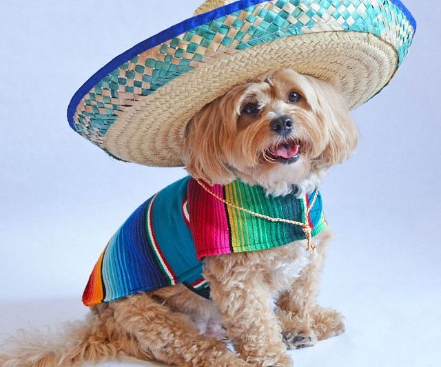 Image result for cartoon . dog in poncho