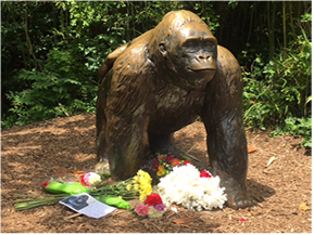 flowers placed at statue outside Cincinnati Zoo in remembrance of Harambe