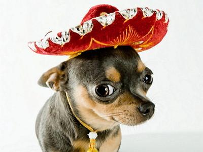 mexican-dog-names-400x300.jpg