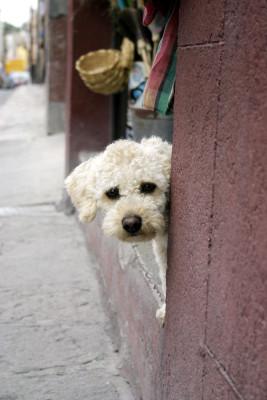 sad-dog-1185453