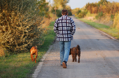 walking-with-dogs-1428689