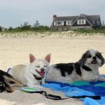 Pets Vacation Like Celebrities in the Hamptons This Summer!