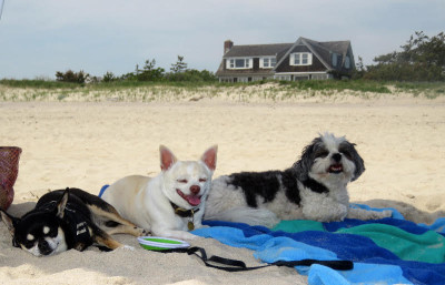 Baby Hope and her friends hanging out in the Hamptons!