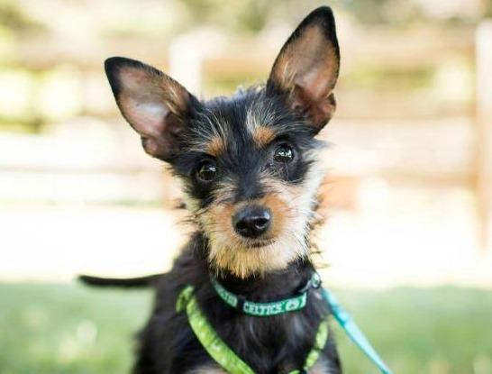 Adopt Me Tiny Tina Is Waiting For You Animal Fair