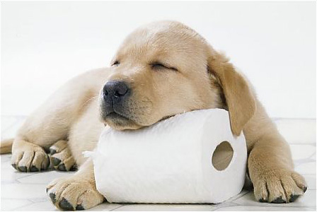 10 Helpful Tips For Potty Training Your Pooch Animal Fair