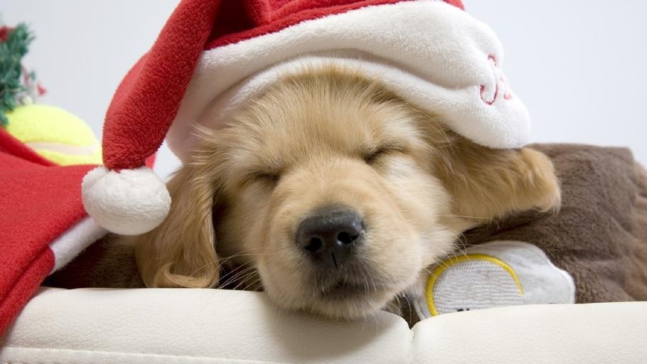 holiday bed pup sleep  dog cute
