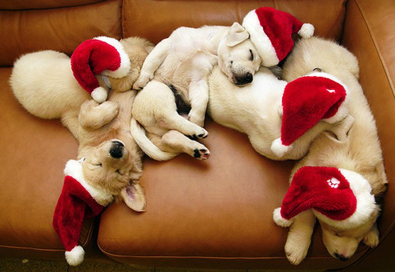 Holiday Pups Passed Out!!