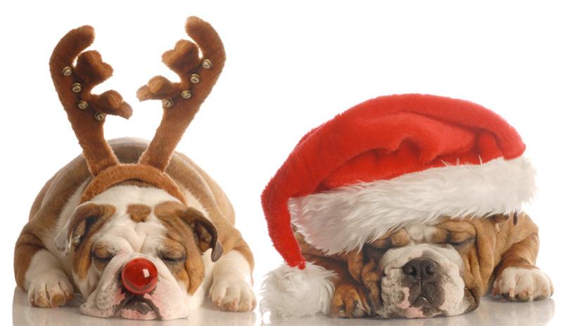 xmas holiday dogs sleeping