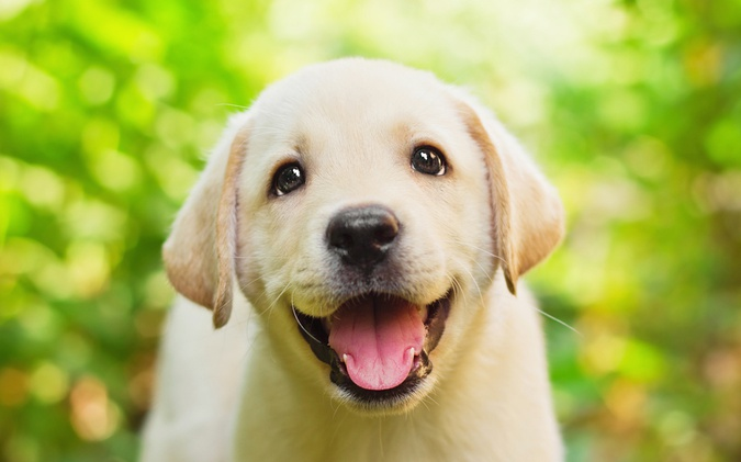 What Pet Parents Need To Know About Animal Cancer And CBD
