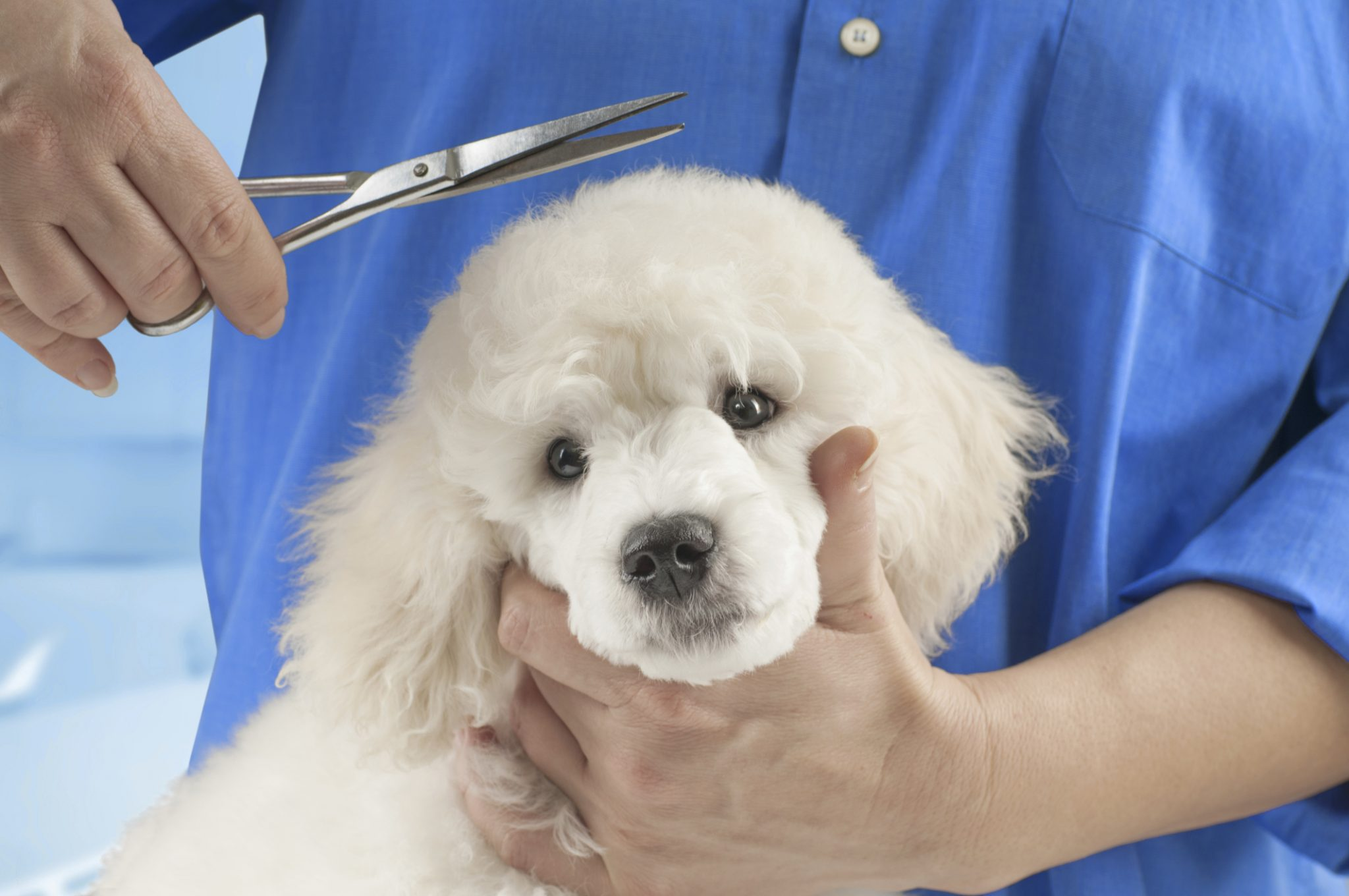 What To Do When Your Pup Is Hurt By A Groomer Baby Hope S