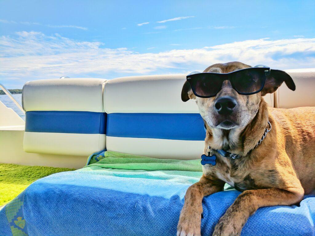 Dog with sunglasses, dog on boat, summer, happy dog